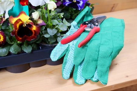 gardening gloves: clippers and gardening gloves with  flowers Stock Photo