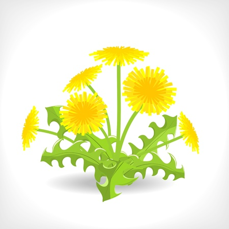 illustration of dandelion on white background Stock Vector - 13558244