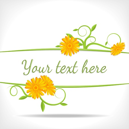 marigold: herbal background - banner with green twigs and flowers of marigold- vector illustration Illustration
