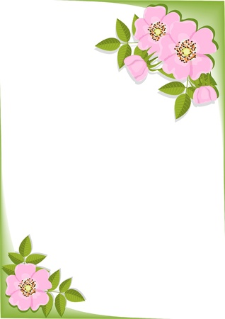background with flowers of dog rose  Illustration