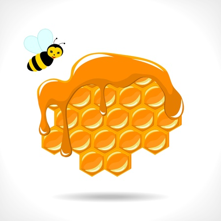 apiculture: honeycomb with a bee on white background