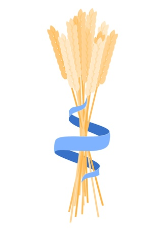 ears of corn with blue ribbon  Vector