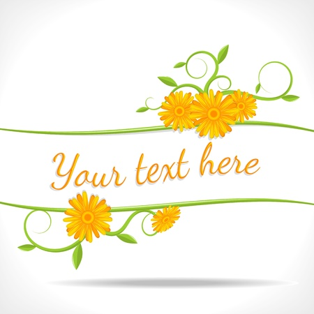 marigold: herbal background - banner with flowers of marigold Illustration