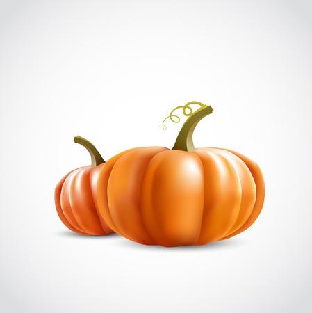 two big orange pumpkins on white background Stock Vector - 15685786