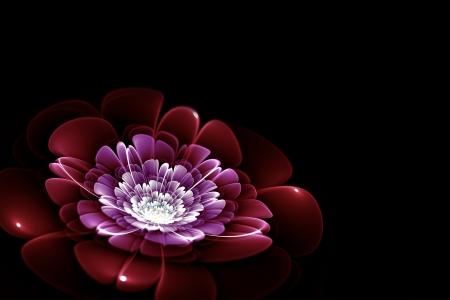 Flor púrpura fractal Foto de archivo - 19376843