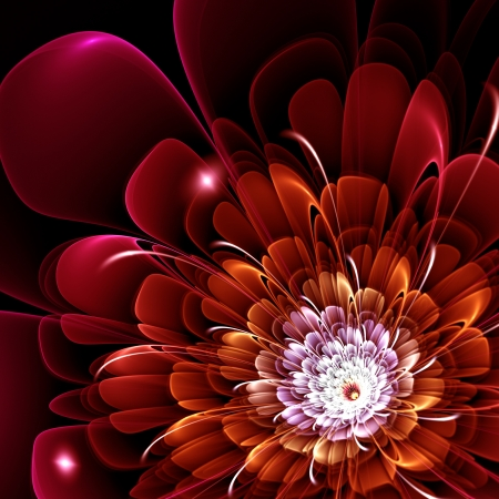 fractal pink: red fractal flower on black background, illustration Stock Photo