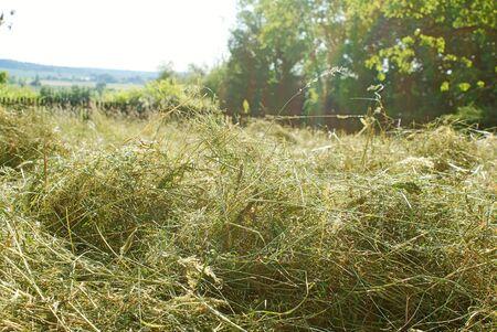 haymaking: haymaking in summer garden