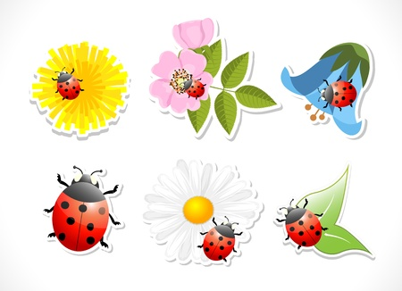 flowers with ladybug on white background, vector illustration, eps 10 Stock Vector - 20747926
