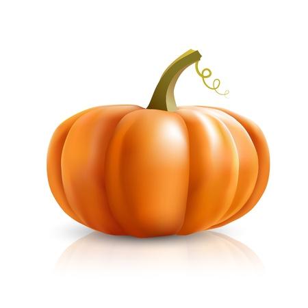 large pumpkin: big orange pumpkins on white background Illustration