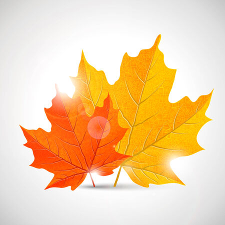 fall leaf: yellow and orange maple leaves, vector illustration,
