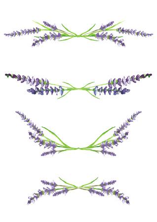 Akwarele ręcznie malowane gałęzie lawendy, skanowane i na białym tle, elementy projektowania, ilustracji