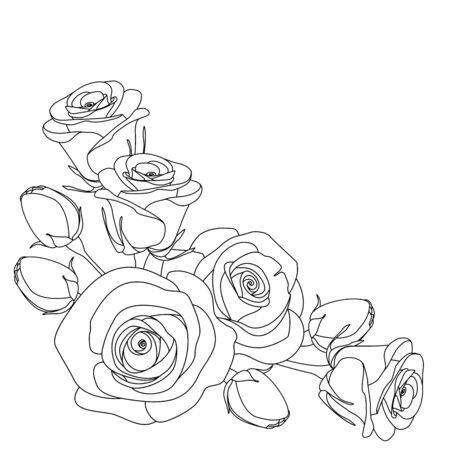 rosas blancas: rosas, ilustración en blanco y negro sobre fondo blanco, Colorear, ilustración vectorial