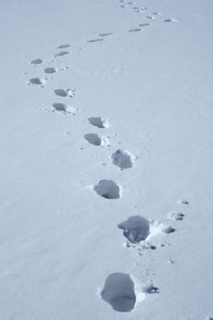 Footprints in the snow making a wavy path. photo