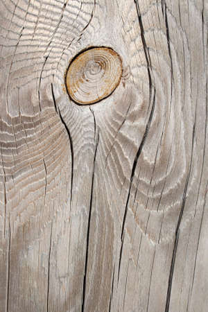 knotty: Wood texture: silver-gray knotty wood, old and cracked.