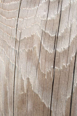 silver texture: Wavy texture of silver gray cracked wood.