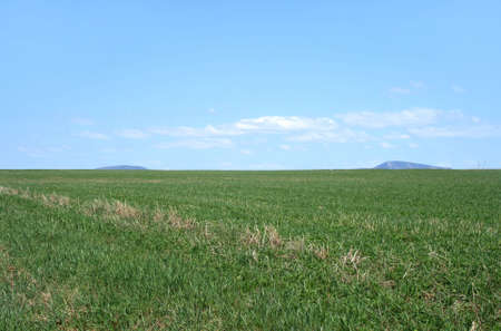 Rural landscape. Spacious green field under the blue sky. Stock Photo - 1067354