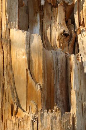 Cracked wood. Wooden texture of a broken tree.