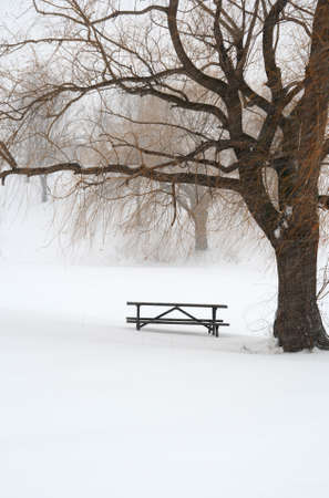 Picnic table in snow under a tree during winter snowstorm. photo