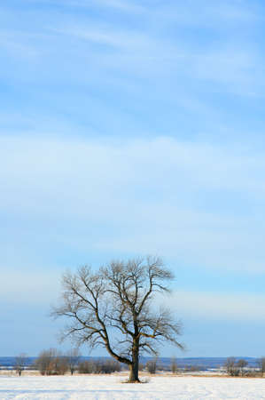 Lonely tree in a winter field under the big blue sky. Stock Photo - 2571426
