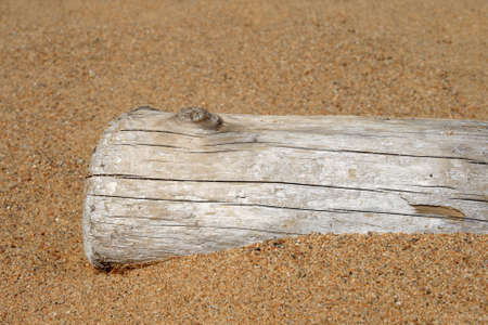 Dry tree trunk in sand on the beach. photo