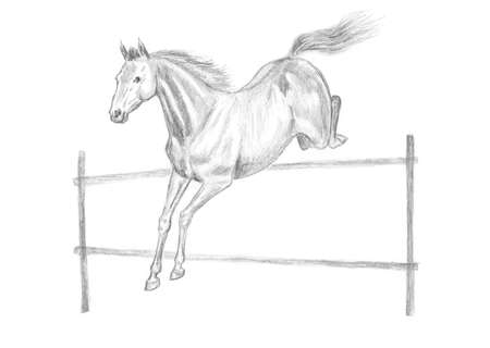obstacle: Jumping horse pencil drawing, hand-drawn.