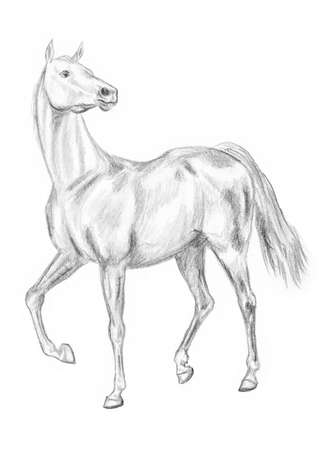Walking horse pencil drawing, hand-drawn.