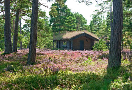 Wooden cabin on a wildflower meadow full of blooming heather. photo