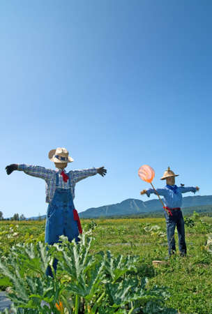 Rural scene � two scarecrows in the field. photo