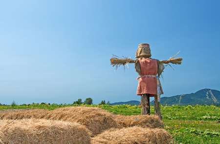 Rural scene - scarecrow and bales of hay in the field. photo