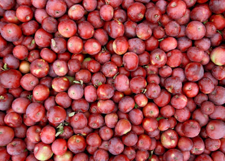Red apples background, freshly picked tasty fruits. photo