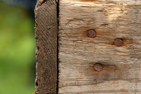 Wood texture with rusty nails on blurry green background. Stock Photo - 8032906