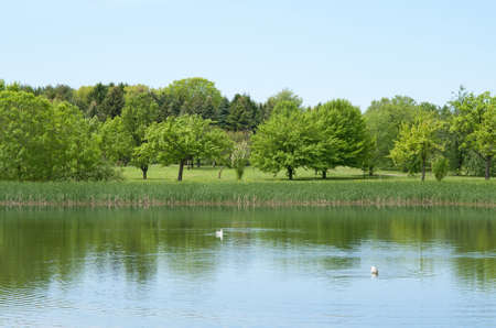 garden scenery: Fresh and bright spring trees growing near a calm pond. Sunny day.