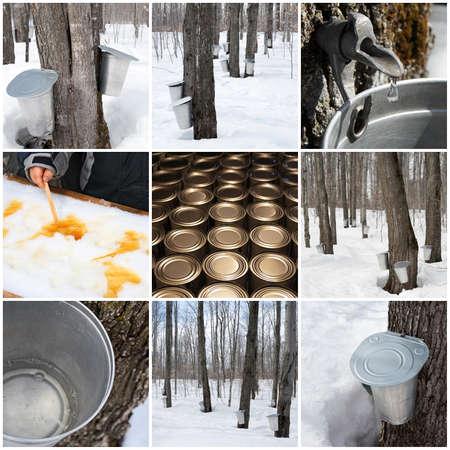 in syrup: La producci�n de jarabe de arce de Quebec, Canad� Primavera de los bosques y los cubos para recoger la savia de arce Foto de archivo