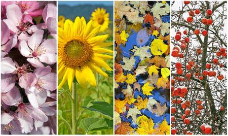 Four seasons  Nature in spring, summer, autumn and winter  Standard-Bild