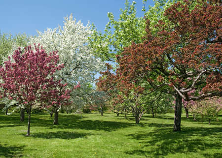 Spring garden  Beautiful trees in bloom on a sunny day  Stock fotó