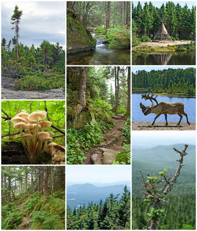 woodland scenery: Summer beauty of forests in Quebec, Canada  Canadian nature  Stock Photo