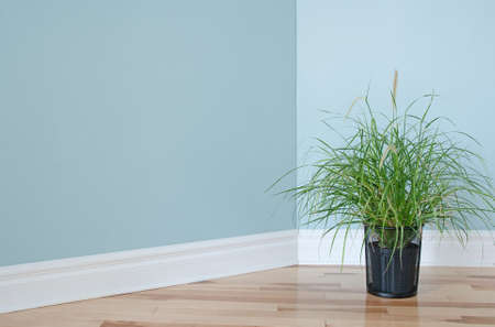 room for text: Green grass plant decorating the corner of an empty room