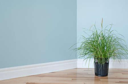 Groen gras planten versieren van de hoek van een lege kamer Stockfoto - 15013144