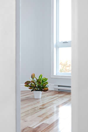 Bright room decorated with plant, seen through the doorway  Standard-Bild