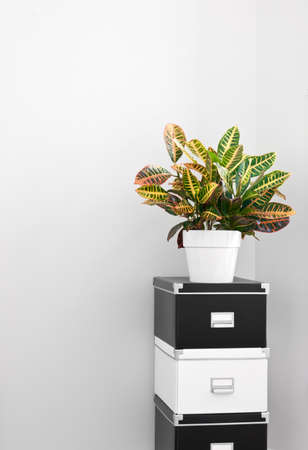 room for text: Black and white storage boxes and green plant in a room corner