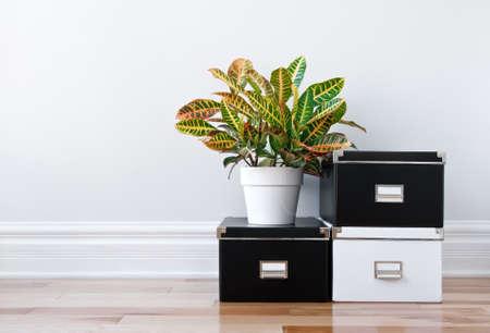 En blanco y negro cajas de almacenaje y planta verde en una habitación