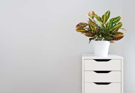 organising: Bright plant and modern white drawer chest  Stock Photo