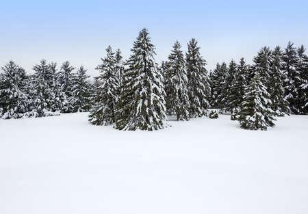 눈보라 아름 다운 겨울 일 후 숲 스톡 콘텐츠