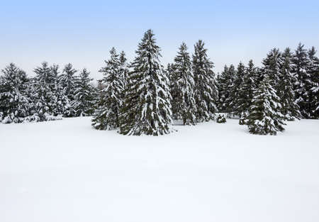 Forest after the snowstorm  Beautiful winter day  Stock Photo - 18205620