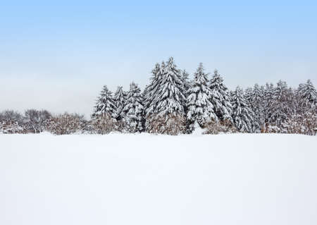 snowscape: Field covered by snow and calm winter forest after the snowstorm
