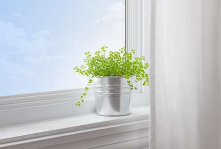 현대 가정에서 창틀에 녹색 식물