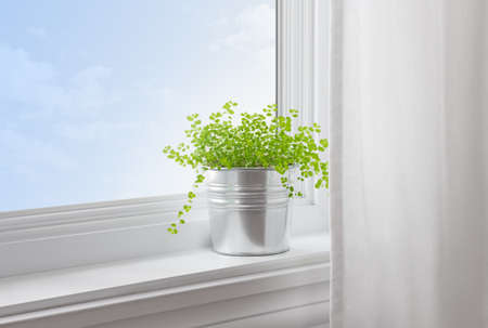 curtain: Green plant on a window sill in a modern home