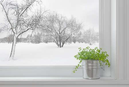 겨울 창을 통해 본 풍경과 창턱에 녹색 식물