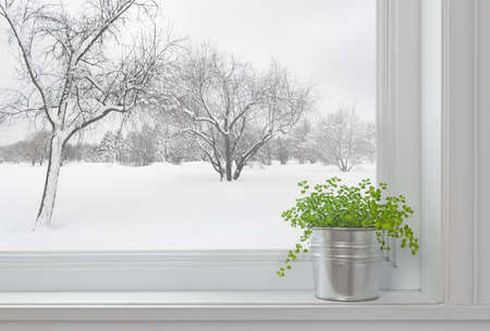 indoors: Winter landscape seen through the window, and green plant on a windowsill