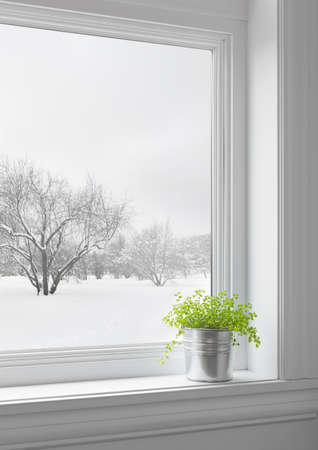 Green plant on a windowsill, with winter landscape seen through the window